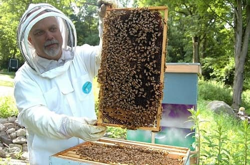 How to Handle Bees handling frames