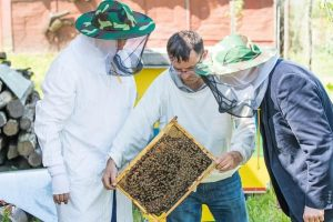 How to Handle Bees with protective suit