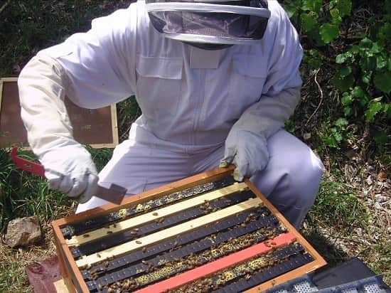 Opening the hive using Hive Tool