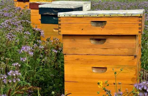 Protective-Clothing and Equipment For Beekeepers beehive