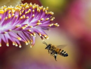Quick Tips About Using Nectar substitutes honey bee 300x229