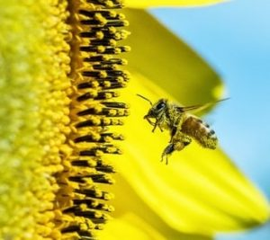 The Secret of Pollen Substitutes