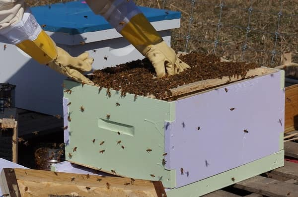 Tips on Acquiring Bees Established Colonies