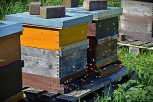 Top 15 Best Bee Hive to Buy