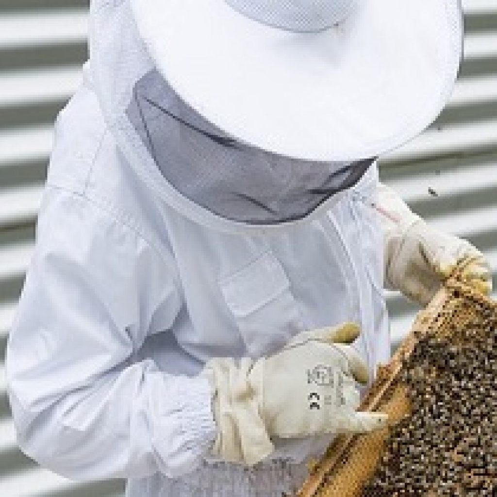 Best Beekeeping suit